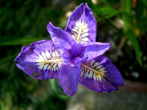 1004紫花2.jpg