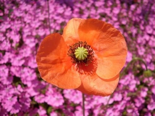 1004オレンジ花.jpg
