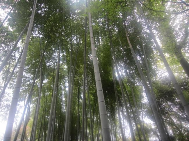 大倉公園12.jpg