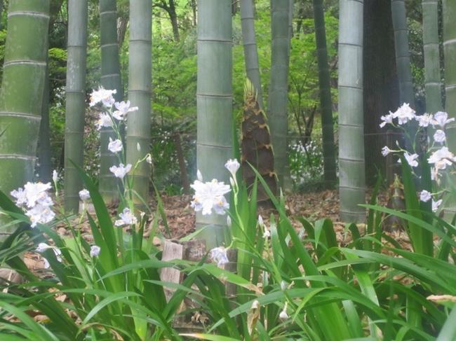 大倉公園13.jpg