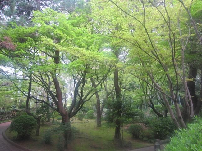 大倉公園16.jpg